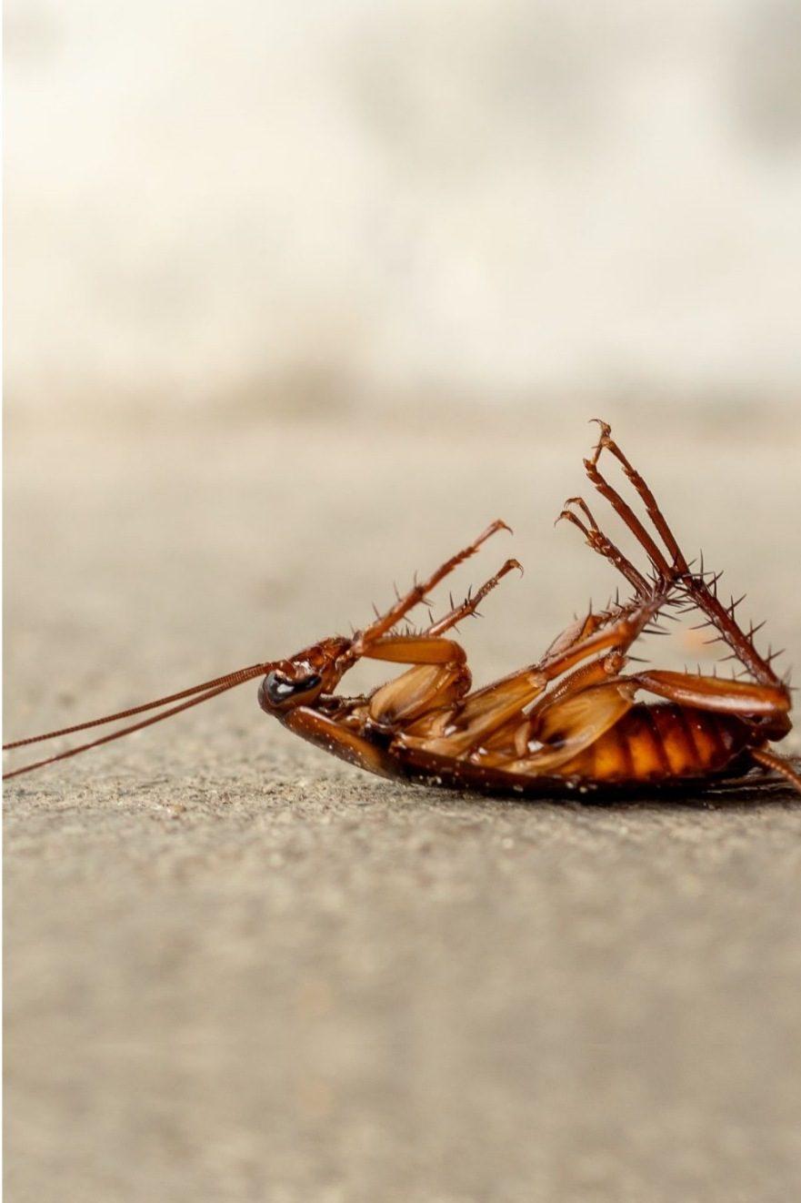 dead-cockroach-floor